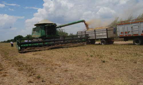 Resultado de imagen de El gerente técnico de la Asociación Nacional de Productores de Oleaginosas y Trigo (ANAPO), Richard Trujillo,