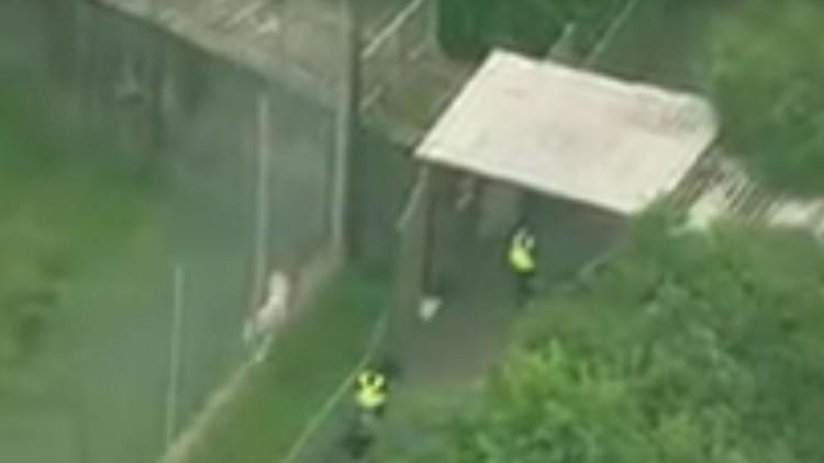 Reino Unido: Empleada de un zoológico muere en un