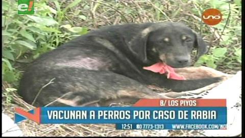 Buscan controlar brote de rabia canina en La Guardia