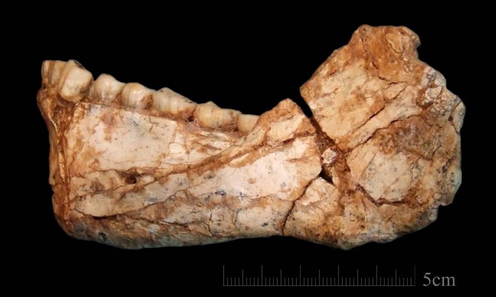 Restos de una mandíbula hallados en Jebel Irhoud (Marruecos).