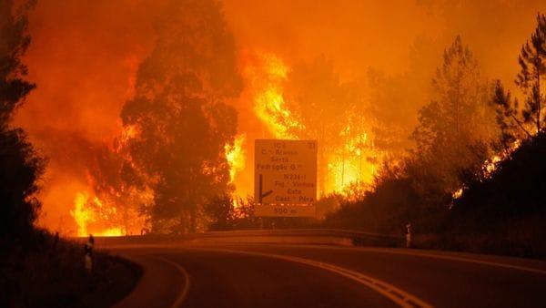 El incendio el bosque resultó incontrolable para las autoridades. (EFE)