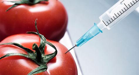 Los transgénicos en las verduras.