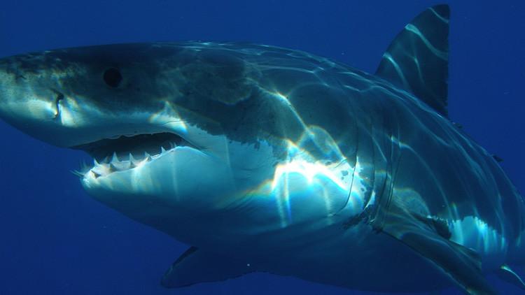FOTOS: ¿Por qué aparecen en la costa de Sudáfrica tiburones blancos desmembrados?