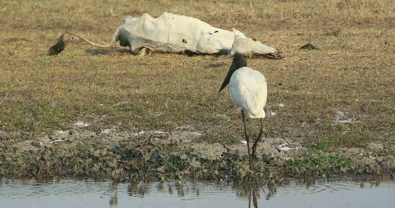 Resultado de imagen de causa de la sequía en Beni