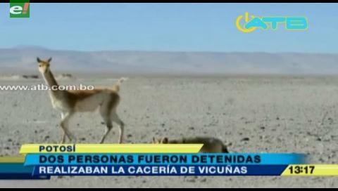 Aprovechaban la nevada para cazar vicuñas en Potosí