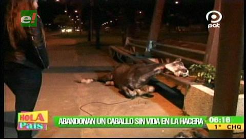 Abandonan a un caballo muerto en la avenida Moscú