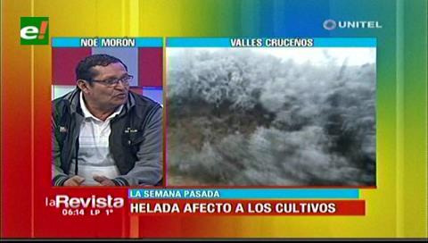Productores de los valles perdieron gran parte de sus cultivos por las heladas