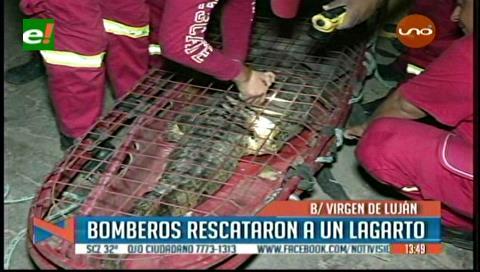 Rescatan a un lagarto en el canal de drenaje de la avenida Virgen de Luján