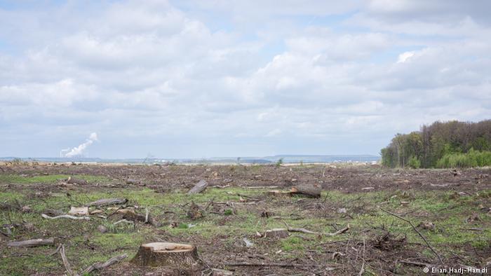 Miles de árboles del bosque de Hambach fueron talados para la explotación minera a cielo abierto.