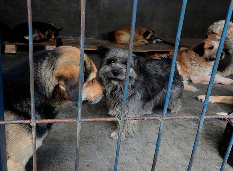Algunas mascotas en la perrera municipal de La Paz.