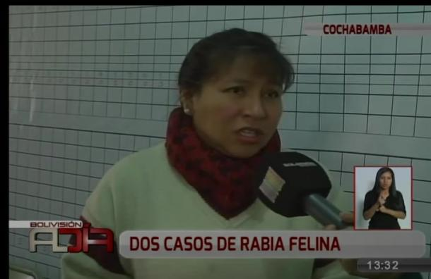 Se registran dos nuevos casos de rabia felina en Cochabamba