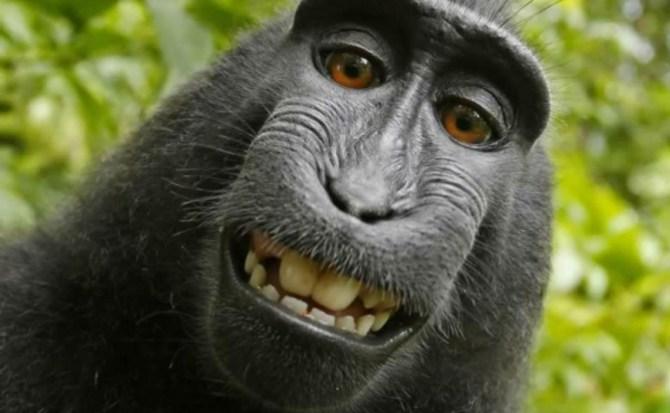 La batalla legal por los derechos del 'selfie' de Naruto termina con sorpresa