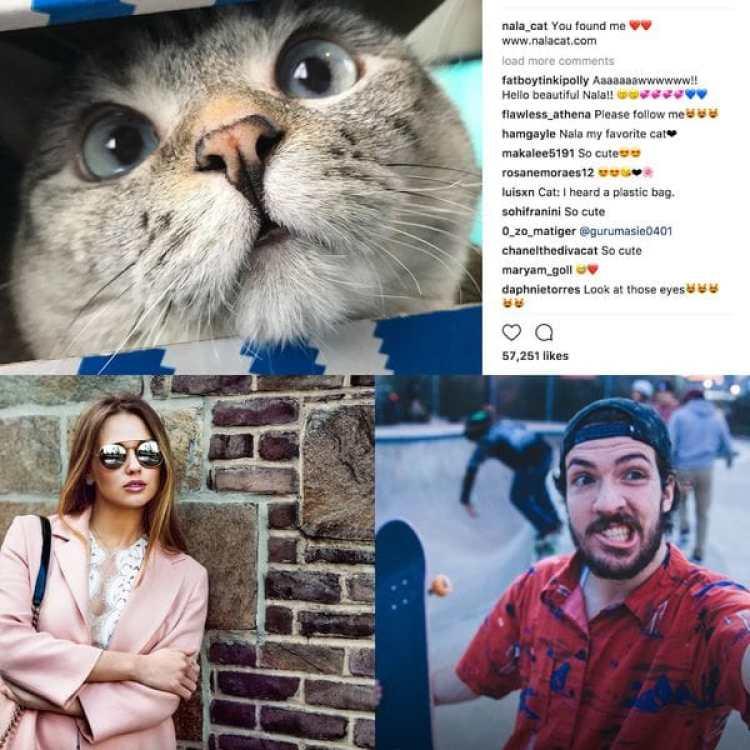 Gracias a las redes sociales, animales, aspirantes a modelo y simples personas que disfrutan de fotografiarse a si mismos pueden convertirse en influencers de la noche a la mañana