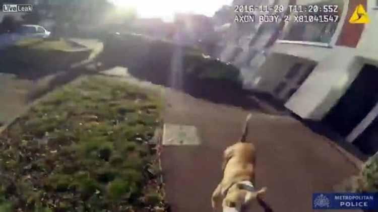 El momento en que el perro embistió al oficial