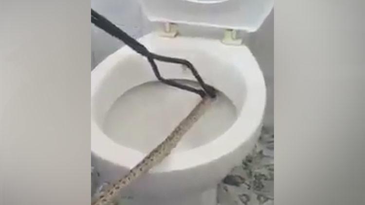 FUERTE VIDEO: Sacan una serpiente de un metro del inodoro
