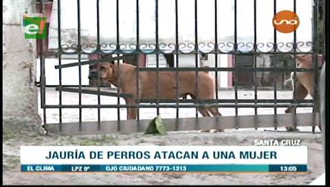 Mujer es atacada por tres perros