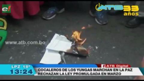 Cocaleros de los Yungas marchan en contra de la Ley de Hoja de Coca