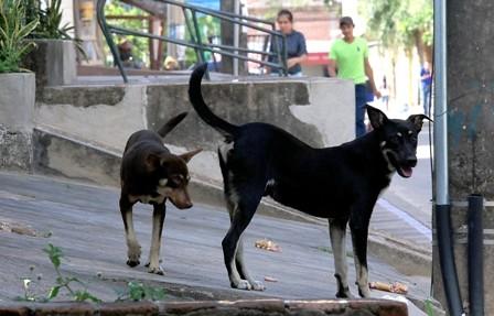 22-barrios--rojos-,-concentran-casos-de-rabia-canina