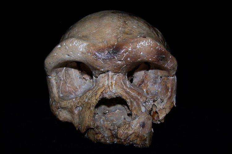 El cráneo de Dali cambia todas las creencias sobre el origen de la humanidad.(Sheela Athreya)