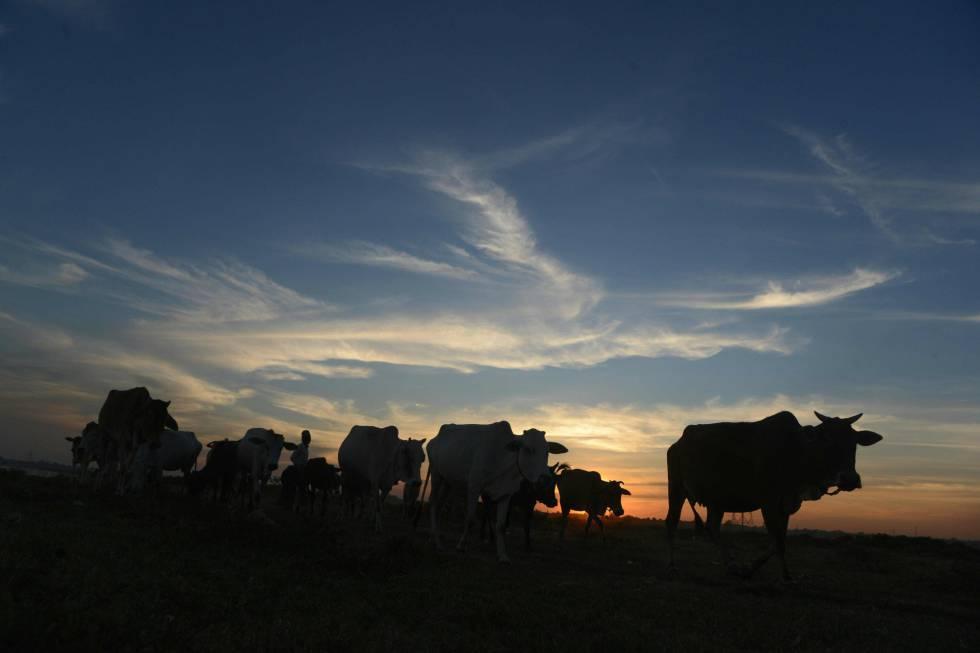 La agricultura convencional ocupa el 99% de la tierra cultivada del planeta