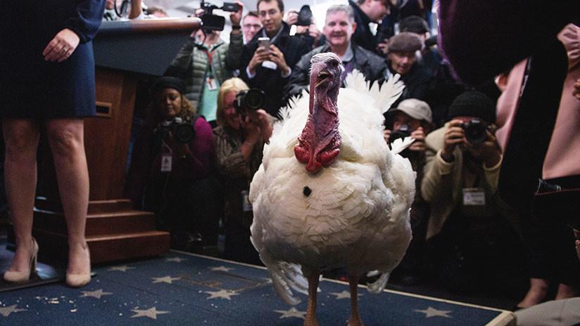 VIDEO, FOTOS: Trump indulta a dos pavos en una singular ceremonia en la Casa Blanca