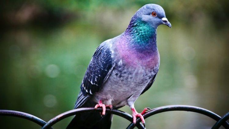 Las palomas discriminaron las palabras mal escritas