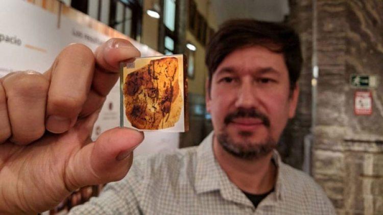 La investigación adjuntaba una pieza de ámbar de Myanamar en la que quedó capturada una garrapata adherida a una pluma de dinosaurio, la primera evidencia de la interacción entre ambos grupos