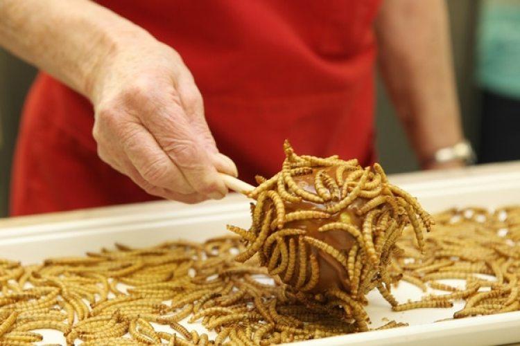 Haciendo manzanas dulces con gusanos de harina en la cocina Hotlix. Foto: Getty Images / Barcroft