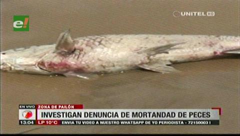 Gobernación cruceña investigará la mortandad de peces en el río Parapetí