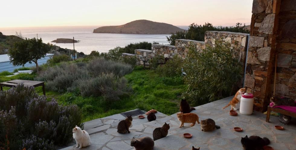 Los gatos en el santuario felino de Siros en Grecia.