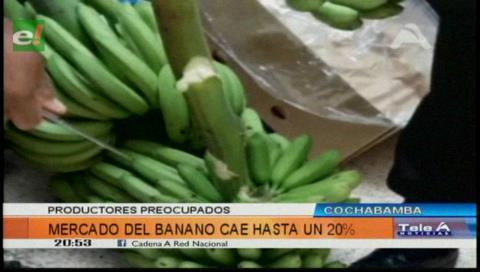 """Cochabamba: Cae exportación de banano en 18% y ven la """"peor"""" crisis de la década"""