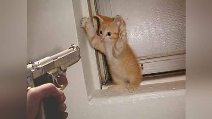 spoof news cat fax