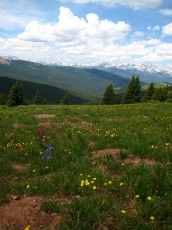 Wildflowers in abundance