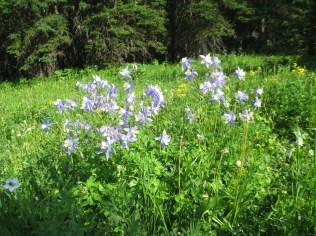 Righteous, riotous wildflowers