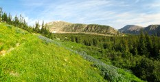 Headed up toward Buchanan Pass