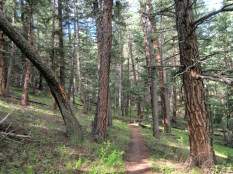 Lovely lovely Beaver Brook trail.