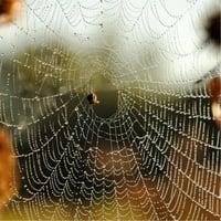 Donna Kay Kakonge | Spiderwomon Audio Stories - The Matoke Collection