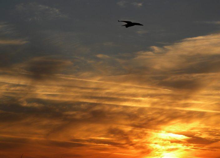 Orange Beach Sunset11-11-2013, Not My Will