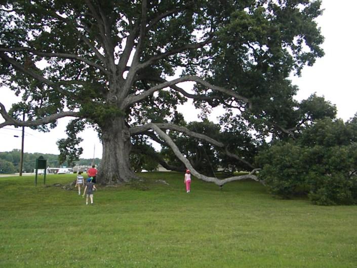 Murfreesboro Tree, Permission