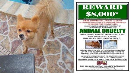 Ofrecen US$8 mil para dar con criminales que mataron perro