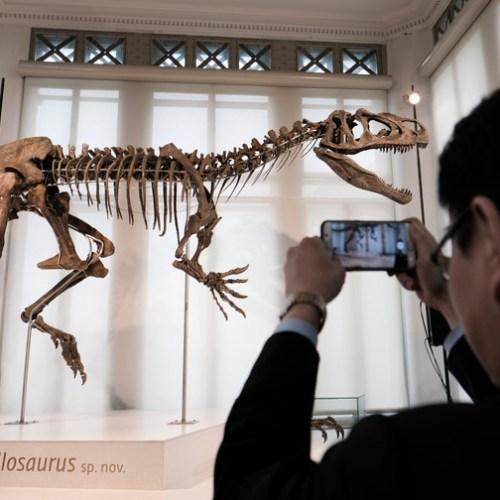 Slideshow: Dinosaur 'Arkhane' on show in Brussels