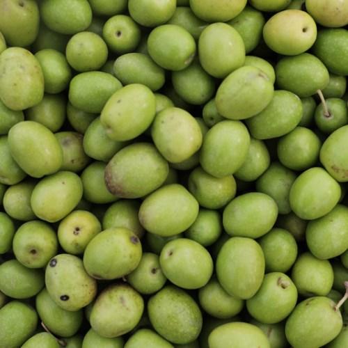 EFSA warns still no cure for olive tree killer Xylella