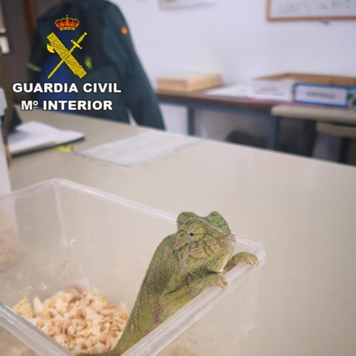 Global action against wildlife crime saves 4 400 reptiles from criminal hands