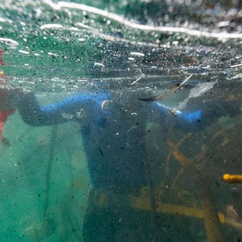 Levels of micro-plastics are rising across the Mediterranean Sea, new study shows