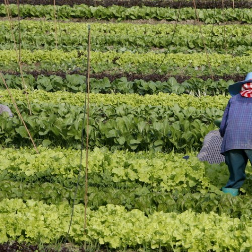 EU Commission prepares new initiatives to boost the organic farming sector