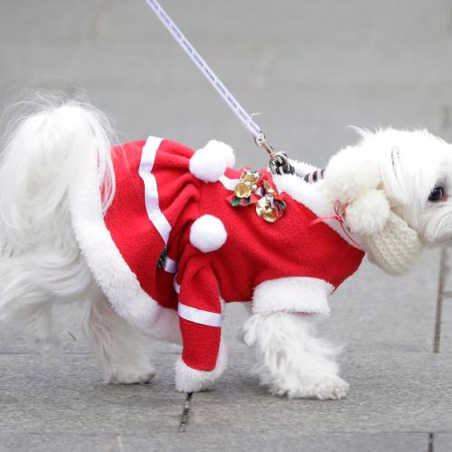 Photo Story – Santa Paws