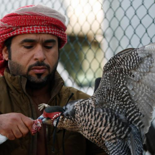 Photo Story: Falconry championship in Dubai
