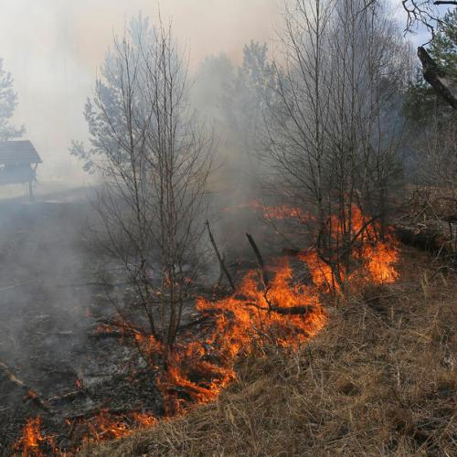 Ukraine forest fire reaches Chernobyl site, raising radiation concerns