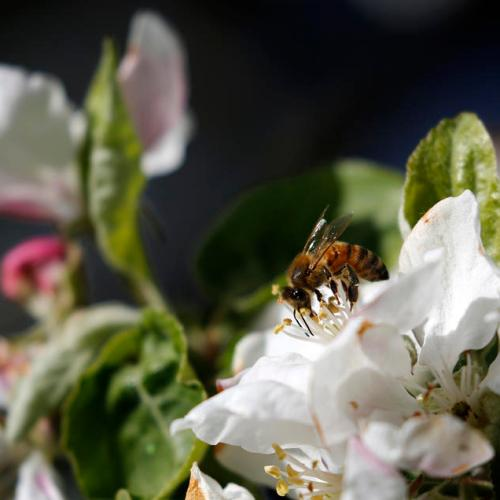 Busy bee as life blossoms in Belarus