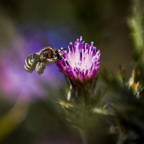 Coronavirus lockdowns keep bees at home and put crops at risk